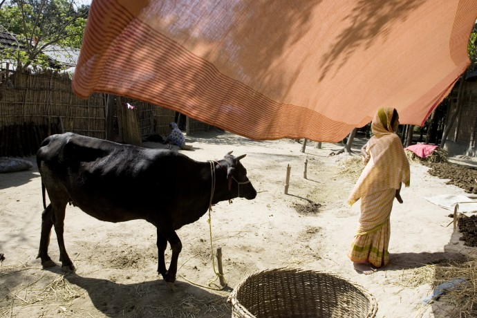 Everyday life scene in Prosadapur Village, Gomostapur district.  - © Giulio Napolitano