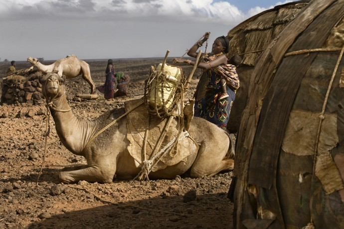 A woman hangs plastic cans to the back of a camel to go collecting water - © Giulio Napolitano
