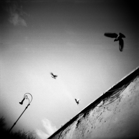 Pigeons on the Roman sky - © Giulio Napolitano