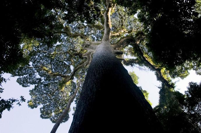 Nkula dense forest, Luki, Bas-Congo - © Giulio Napolitano