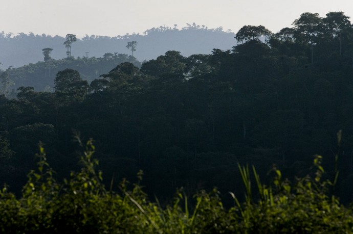 Panoramic view of the tropical forest around the Research Station in Luki, Bas-Congo - © Giulio Napolitano