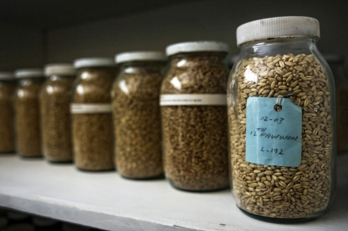 Seed samples in the storage unit, Seed Complex, Herat - © Giulio Napolitano