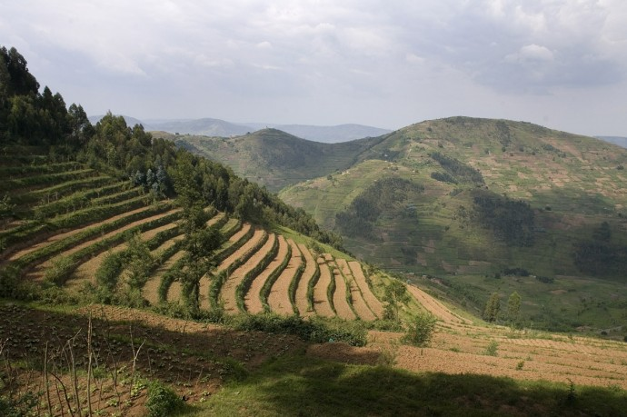 Hill sides where rwandan farmers have learnt to grow also with scarce water  - © Giulio Napolitano