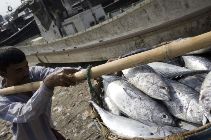Fish landing in Cox's Bazar - © Giulio Napolitano
