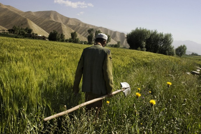 A farmer goes back home after work, Foladi valley, Bamyan - © Giulio Napolitano